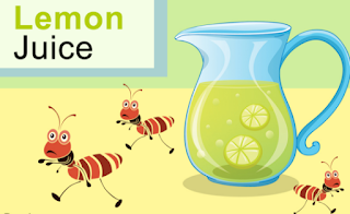 Get Rid Of Ants With Lemon