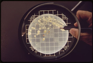 Kiểm tra vi sinh cho phòng sạch