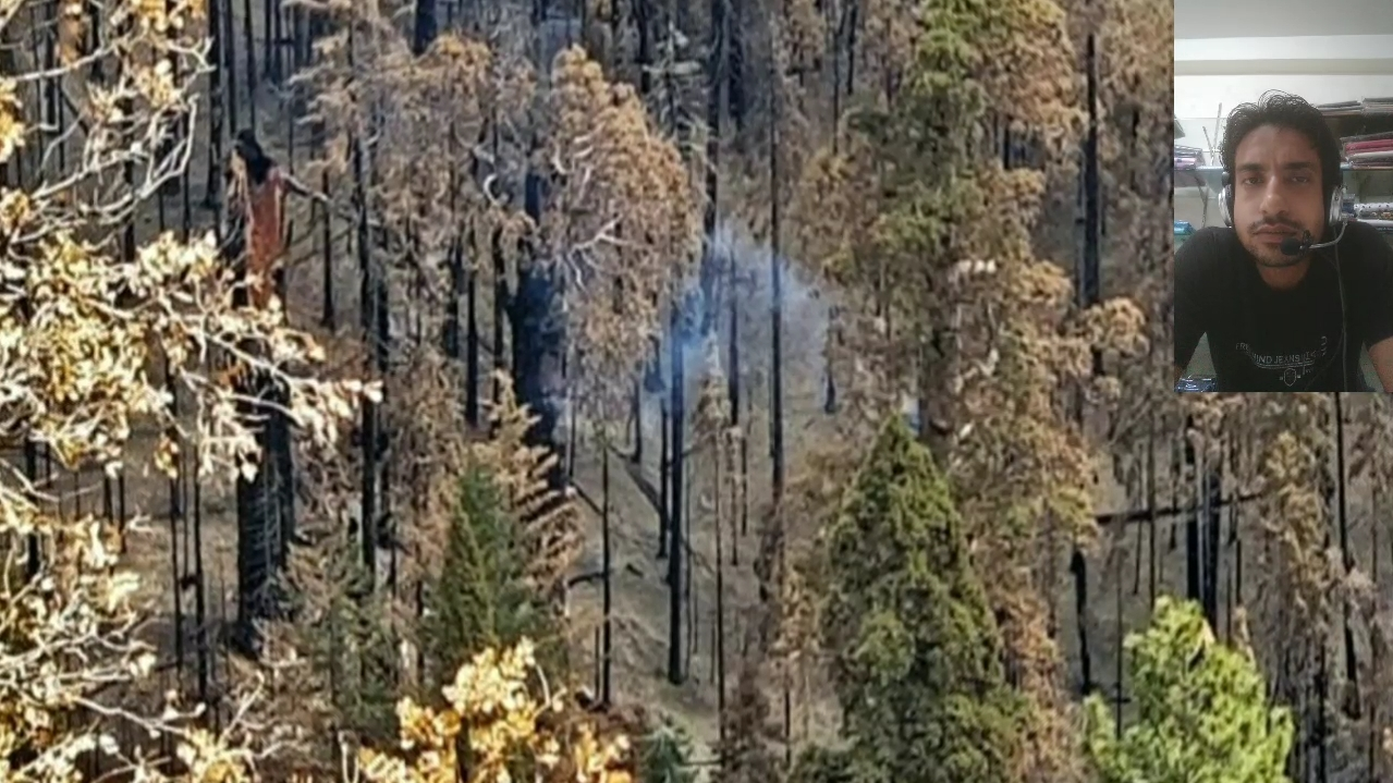 This California tree is still burning today, a fire that was started a year and a half ago