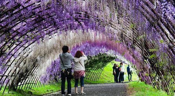 Kawachi Fujien Garden Jepang