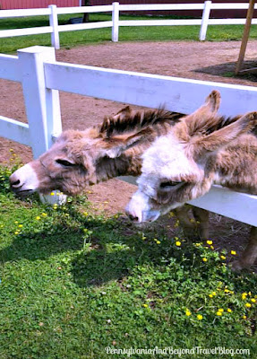 Land of Little Horses in Gettysburg Pennsylvania