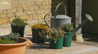 Gardeners' World Thyme Plants