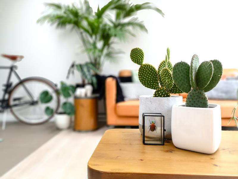 Decoración en salón con plantas: cactus, suculentas.