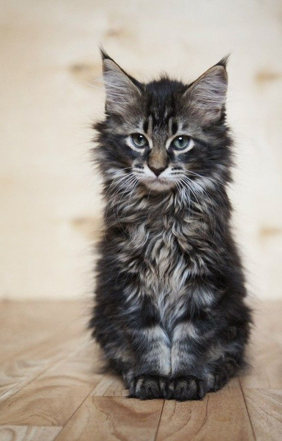 Top 5 Most Friendliest Cat Breeds