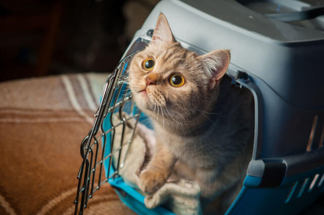 pet transport service