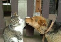 Polizze per cane e gatto: l'assicurazione per animali domestici di Tua Assicurazioni