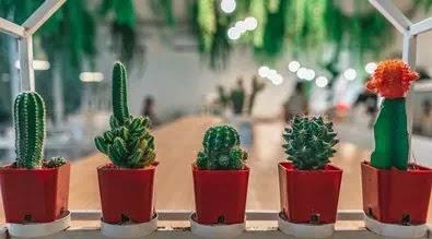 8 Cara Merawat Tanaman Kaktus Agar Cepat Tumbuh Dan Berkembang Pupuk Lahan