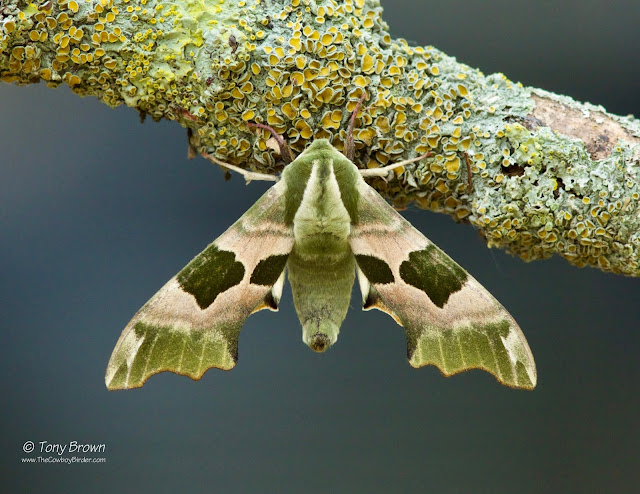 Moths, Teammoth, Mothsmatter