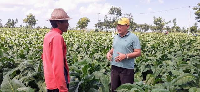 Haji Masrun Menilai Potensi Tembakau jadi Berkah di Lombok Tengah