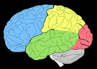 Les pires aliments pour votre cerveau