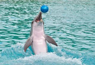 Inilah 3 Tempat Wisata Lumba Lumba Di Bali