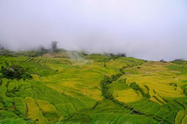 Ngắm cảnh sắc 'thiên đường' ruộng bậc thang hùng vĩ ở Y Tý Lào Cai 3