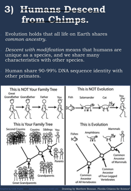 Great Infographic Breaks Down The Top 5 Misconceptions About Evolution