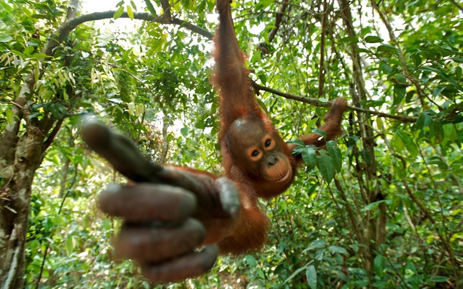 44+ Hewan Dan Tumbuhan Yang Hampir Punah Di Indonesia Beserta Gambarnya Gratis Terbaik