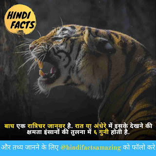 amazing facts about tiger in hindi