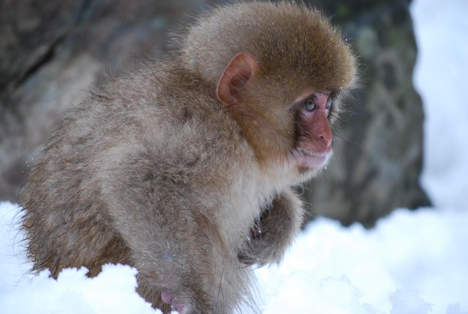 "Japanese Inn Japan Journal: Snow Monkeys, The Japanese ""alps"" And Onsen"