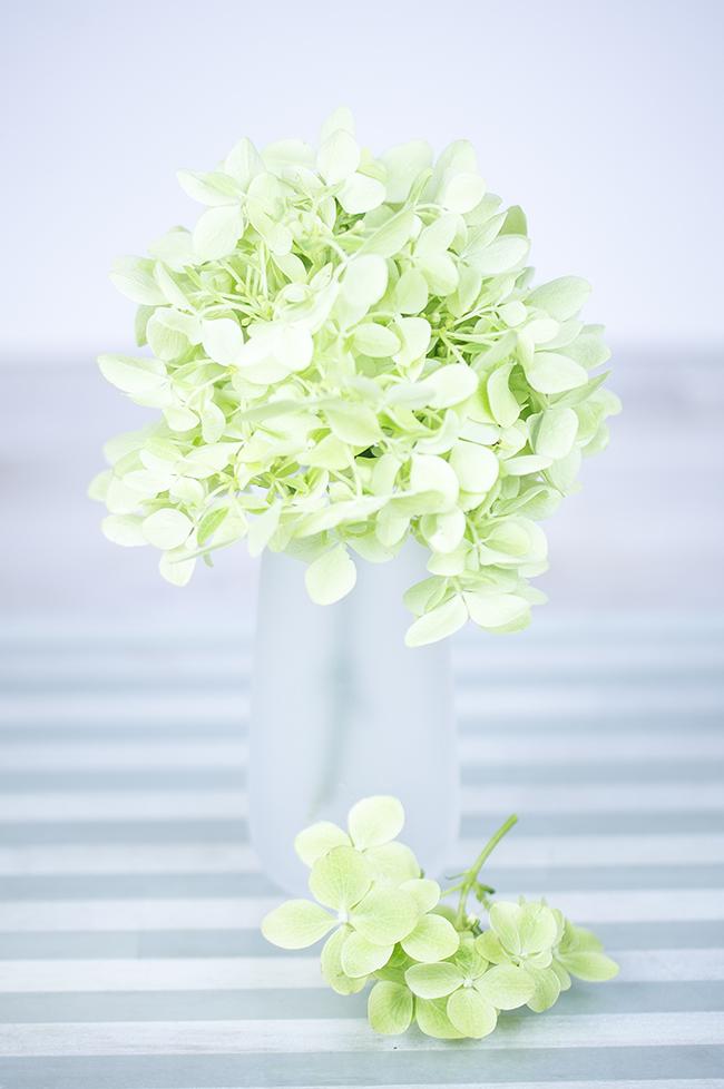 Hortensien | zartgrün | in der Vase