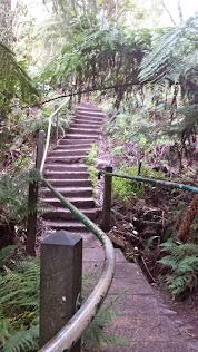 1000 Steps, Kokoda Track, Dandenong Ranges
