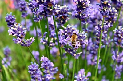 Bird and the bees | Top facts about Bird and the bees: