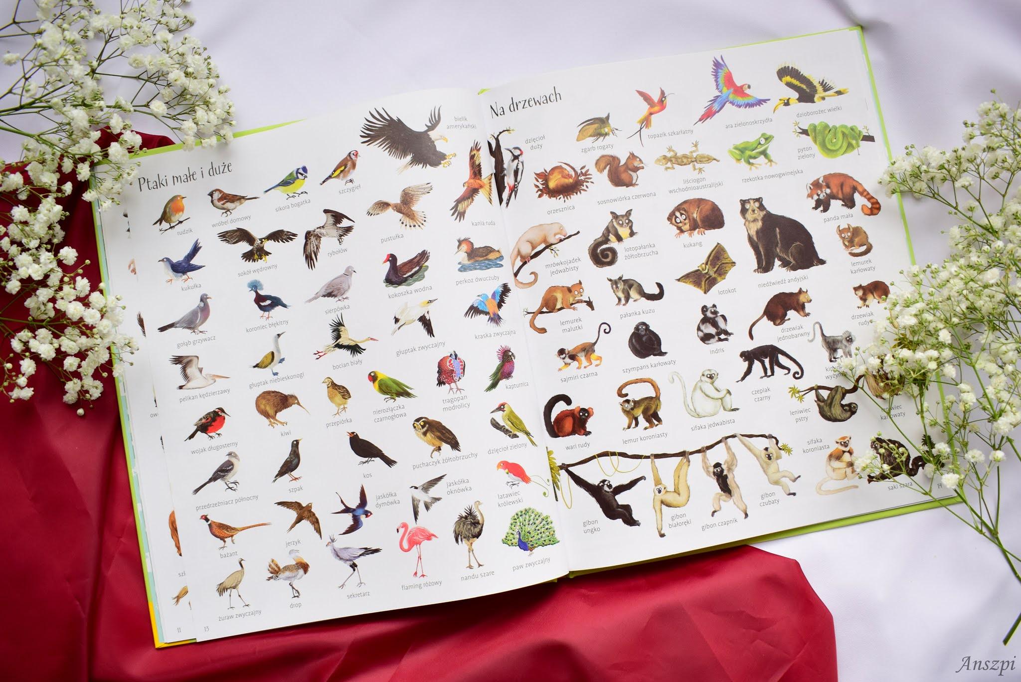 encyklopeida zwierząt
