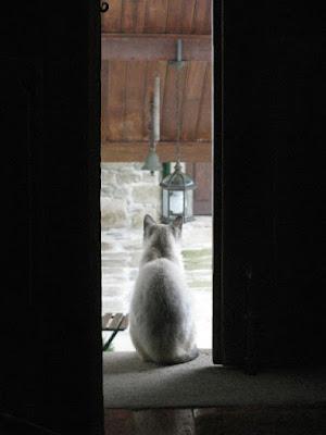 gato por entre uma porta
