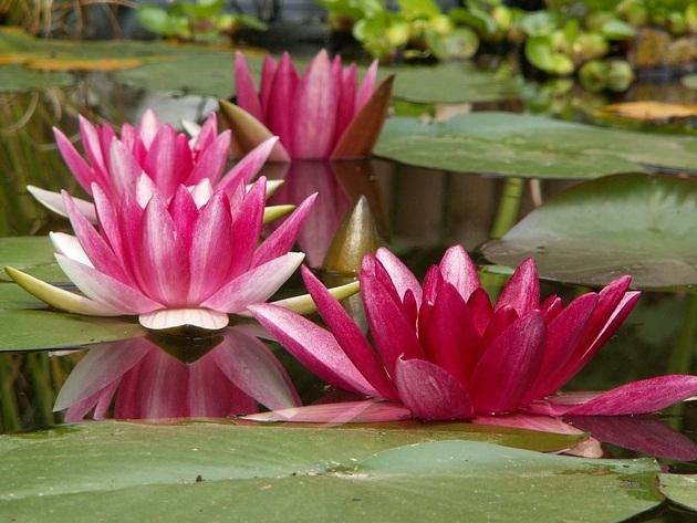 Contoh Soal Tentang Ciri Khusus Tumbuhan yang Hidup di Lingkungan Tertentu 10 Contoh Soal IPA Tentang Ciri Khusus Tumbuhan yang Hidup di Lingkungan Tertentu
