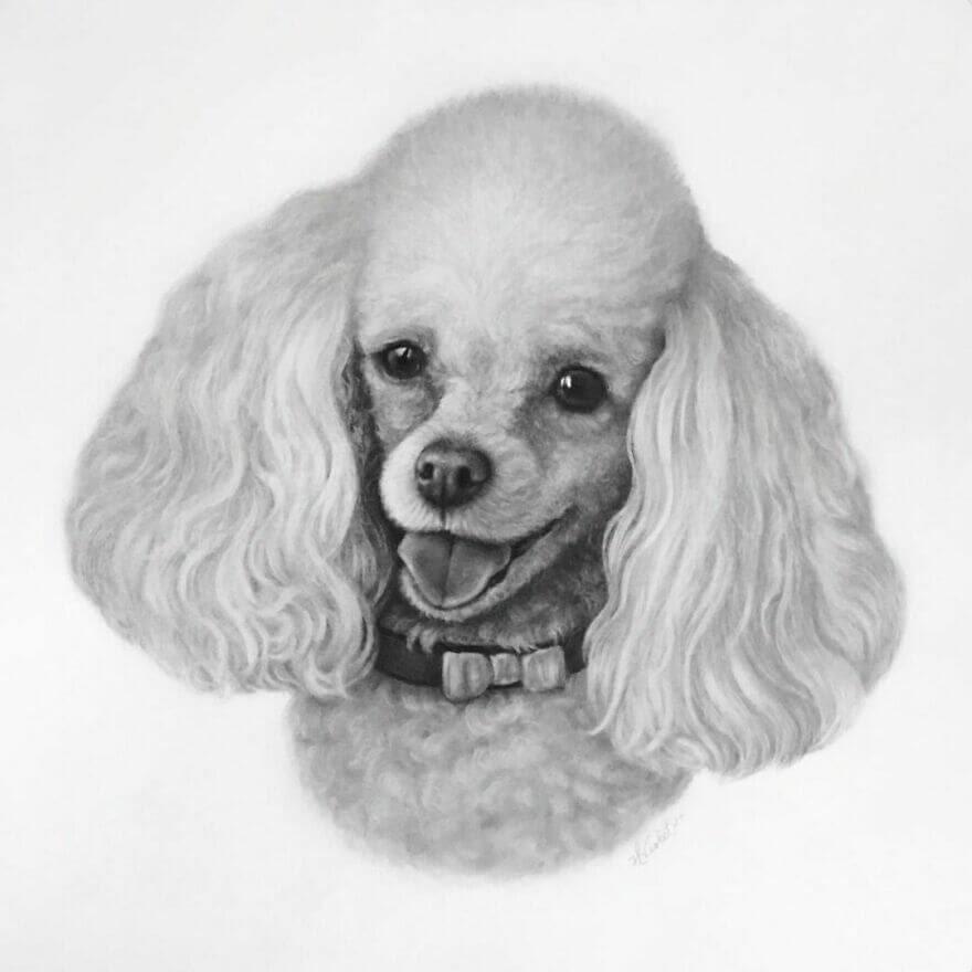 06-Miniature-Poodle-Helen-Violet-www-designstack-co