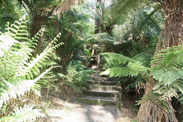 steps in rainforest walk