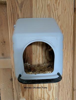 Plastic nest boxes in chicken coop
