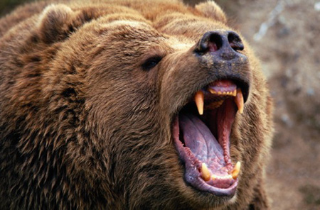 Perpetual Preparedness: Bear Attack!