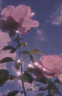 صورة وردة مع منظر السحاب