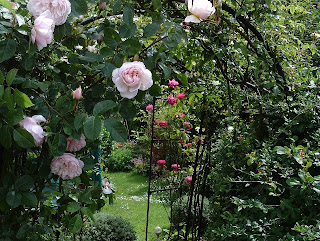 The rose walk in June,  arches covered in flowers