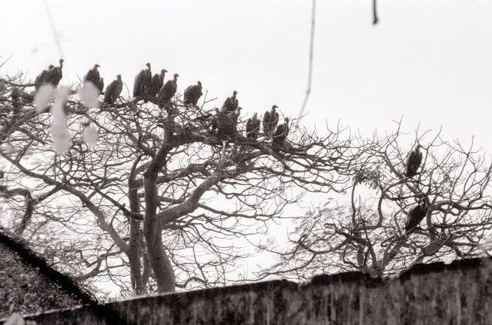 Mumbai, Malabar Hill, tours de silence, dakhma, parsi, mazdéisme, zoroastre,  © L. Gigout, 1991