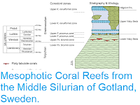 https://sciencythoughts.blogspot.com/2019/01/mesophotic-coral-reefs-from-middle.html