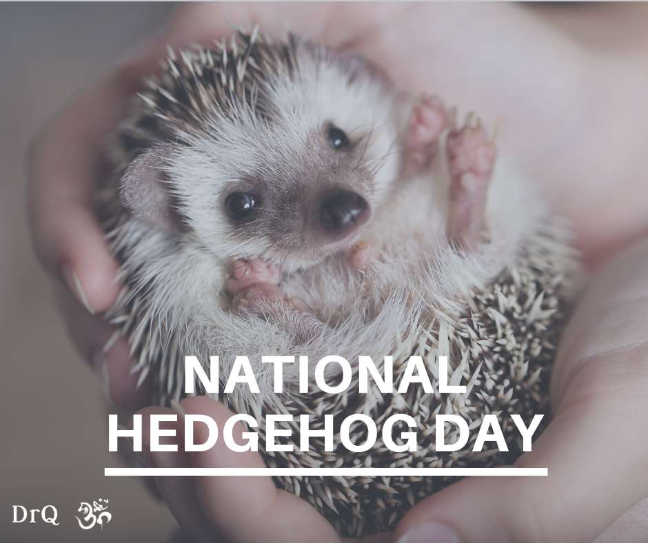 National Hedgehog Day Wishes For Facebook