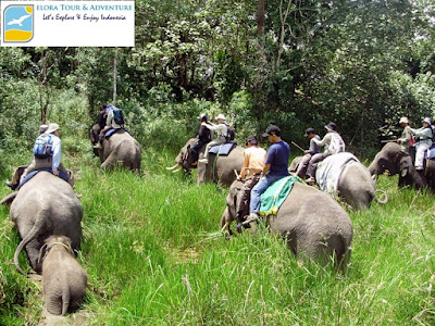 foto gajah taman nasional way kambas elora tour adventure