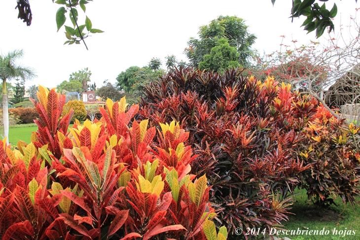Descubriendo hojas jard n bot nico en el parque de las for Plantas ornamentales para parques