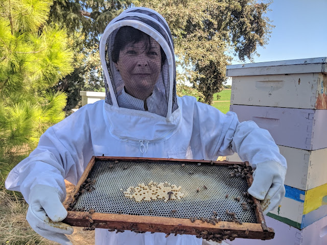 Beekeeper for a day