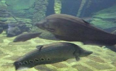 Aquarium Air Tawar TMII