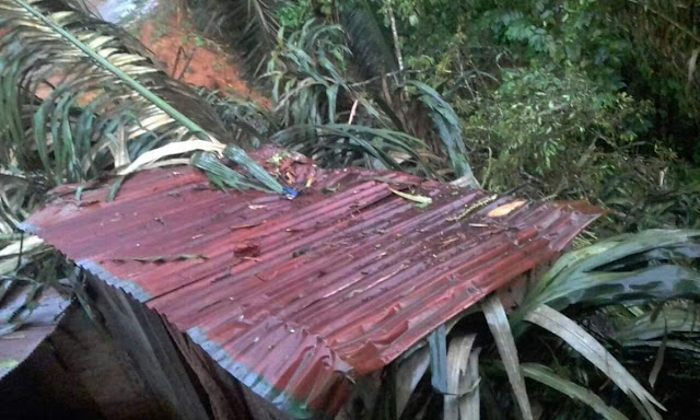 Hujan Deras Disertai Angin Kencang di Toraja, Pohon Tumbang Timpa Rumah di Tarongko
