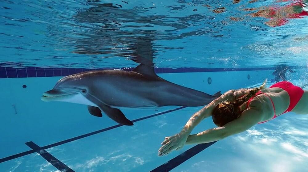 Dolphin Robots