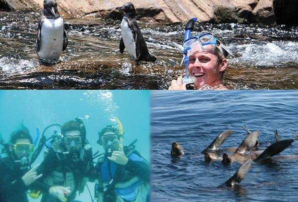 Tours de buceo en Galápagos un día
