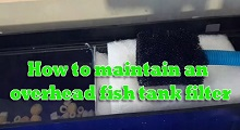 How to maintain fish tank filter