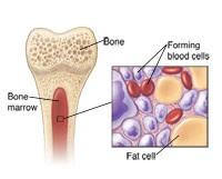 أين تصنع الصفائح الدموية وكم تعيش في مجرى الدم؟