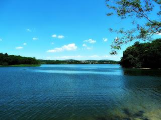 Vegetação nas Margens da Barragem - Parque Saint Hilaire, Viamão
