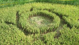 crop circle di Magelang