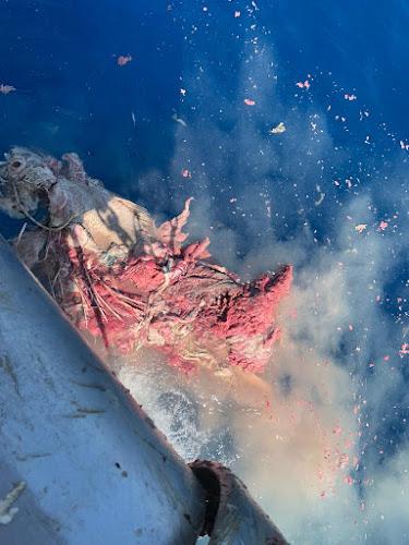 IMG 20200904 WA0001 - Como todos los años los arrastreros de Santa Pola cogiendo atunes en descomposición