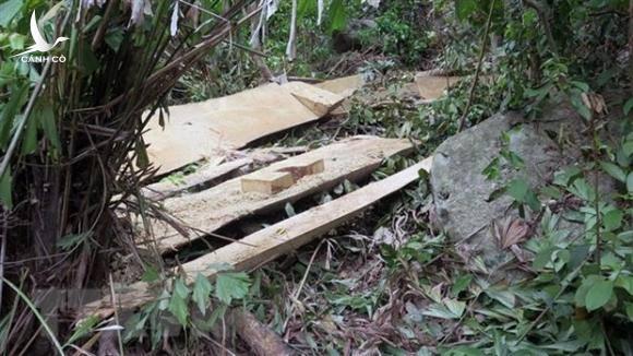 Thủ tướng yêu cầu xử lý nghiêm hoạt động phá rừng tại Kon Tum, đừng để rừng chết!