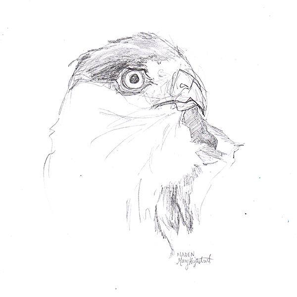 Hawk Head Detail Art by Mary Highstreet