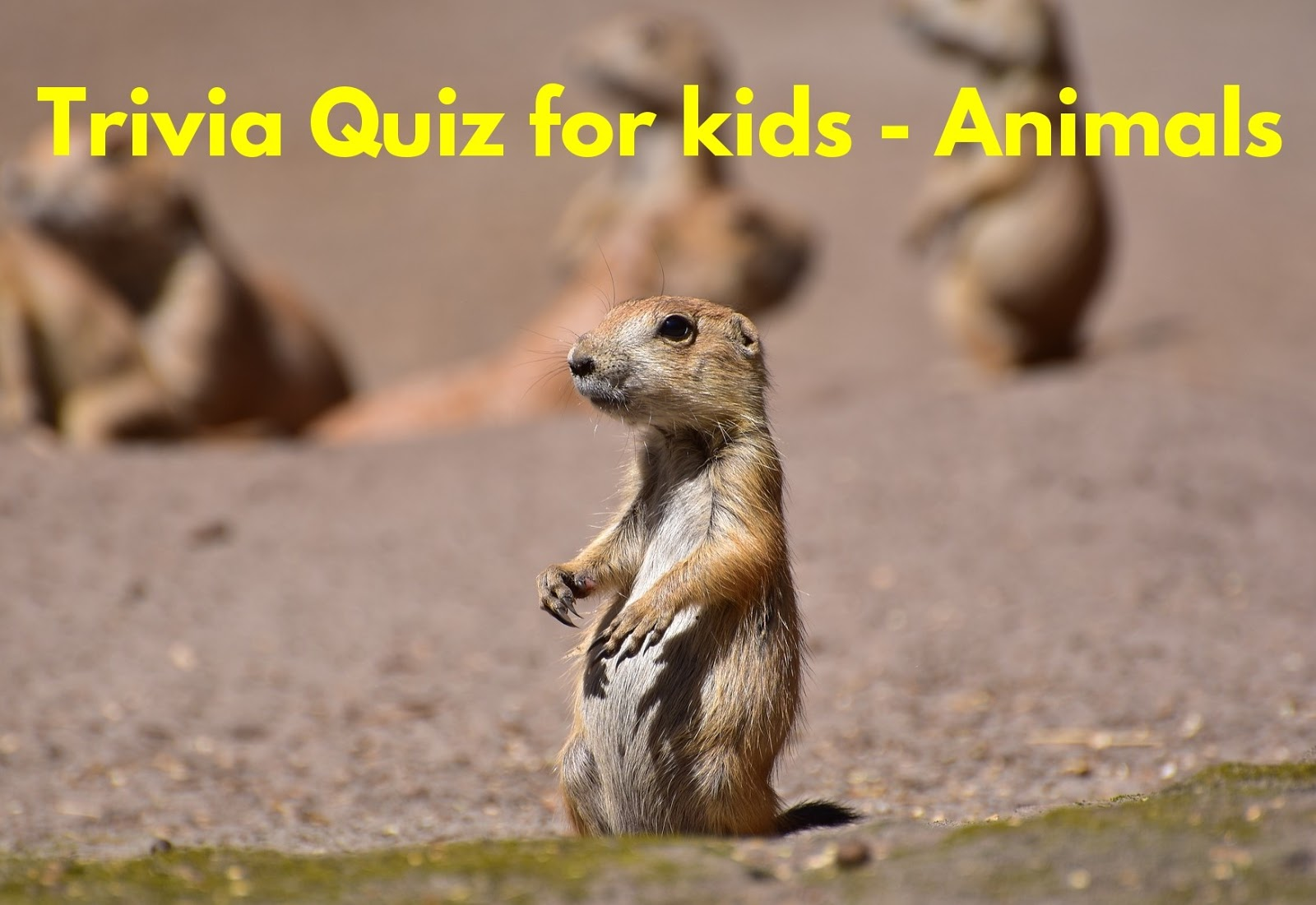Trivia Quiz For Kids Animals Worksheet Questions And